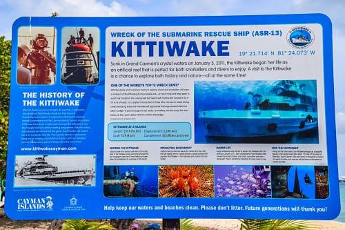 Kittiwake