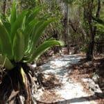 Mastic Trail