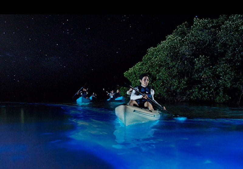 Bioluminescence Kayak Tour